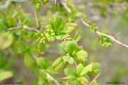 zeleni-svjata